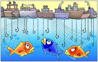 Declining fish catches