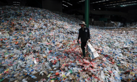 The end of plastic? New plant-based bottles will degrade in a year