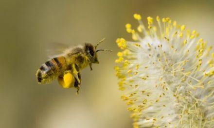 Vanishing honey bees