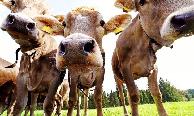 Livestock, Environment & Learnings